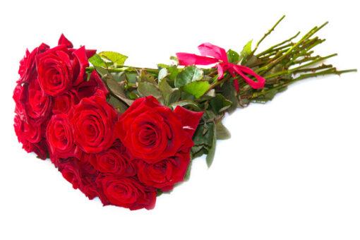 photodune 3631424 red roses xs